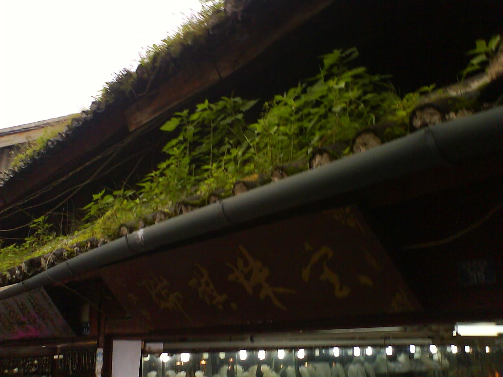 Comment enlever les parasites végétaux sur le toit ?