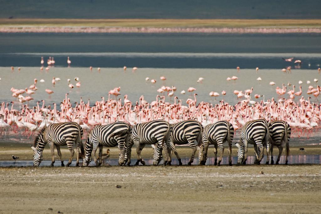 Découvrez le lac Magadi lors de votre safari au Kenya