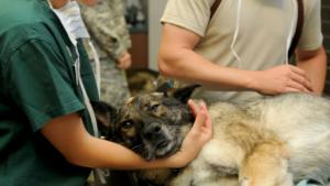 De quels animaux s'occupent les vétérinaires?