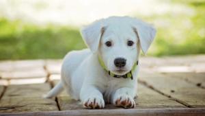Ecoute et compétence au service de l'animal
