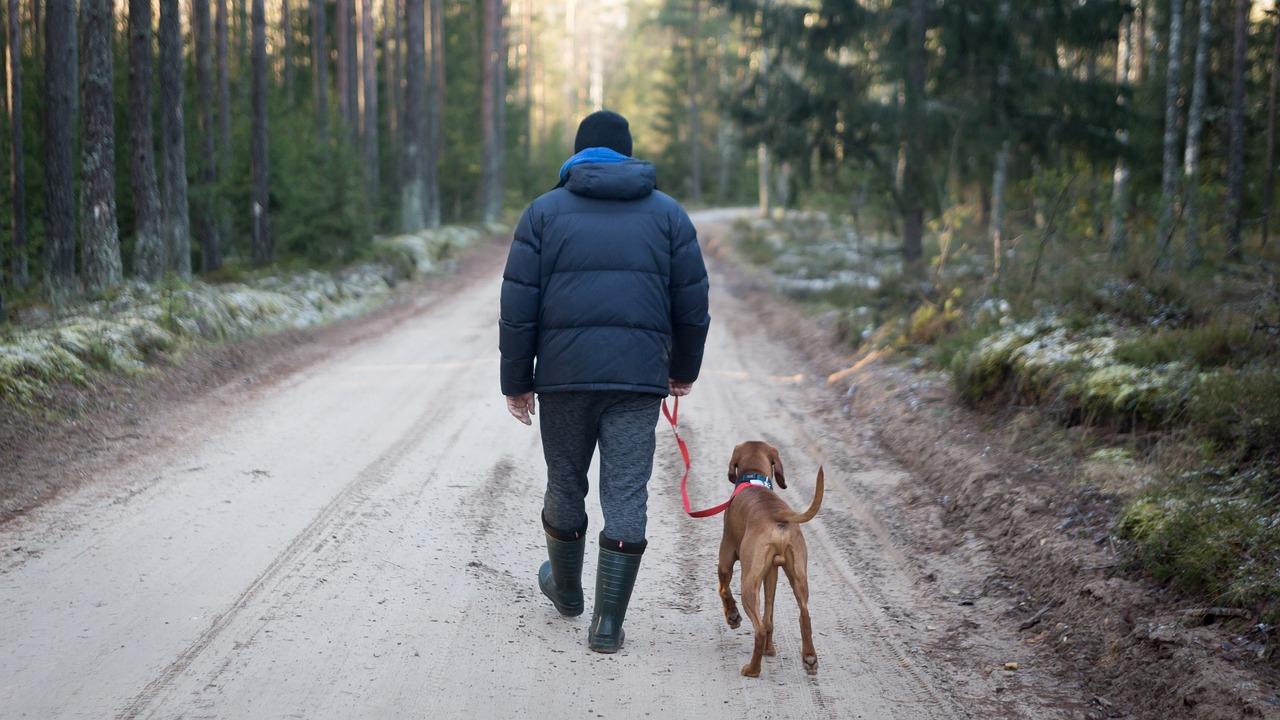 Le collier de dressage, un accessoire nécessaire pour votre chien