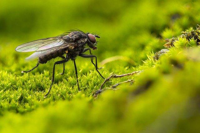 Anti mouche top 10 des solutions pour attraper les mouches