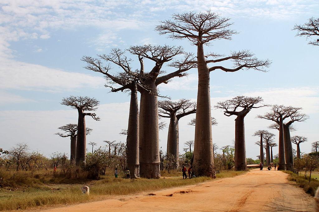Madagascar : découvrir ce qui se cache derrière cette île paradisiaque