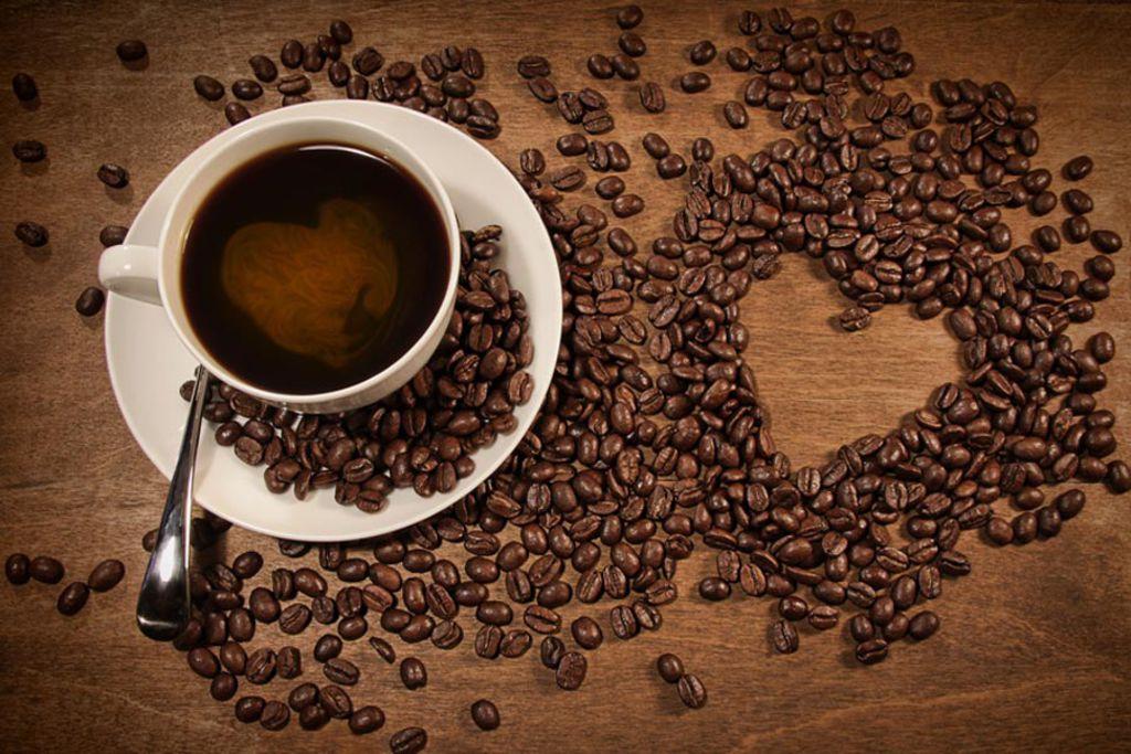 Le café, un univers très vaste avec de nombreuses ramifications